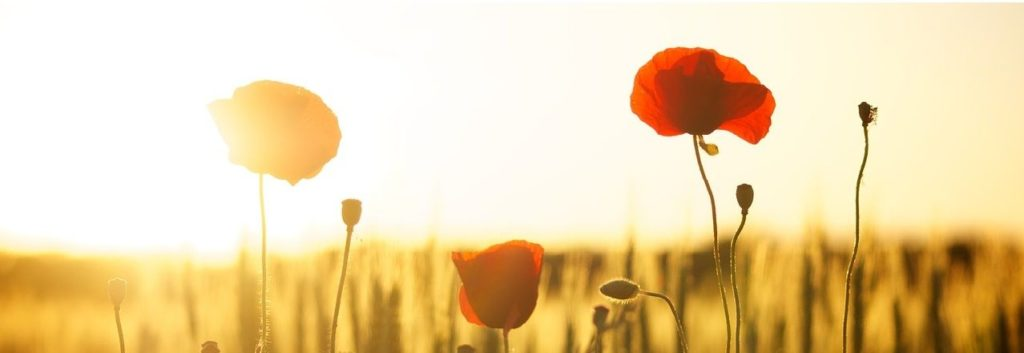 Vitamin D3 -Mohnblumen vor Sonne